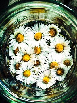 Vintage Gänseblumen