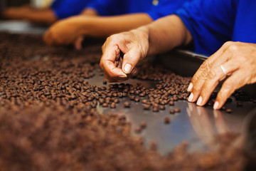 Workers choosing the beans of the best quality at coffee factory