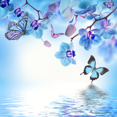 Wall Mural - Floral background of tropical orchids and  butterfly