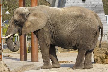 Poster Parrot Afrikaanse olifant
