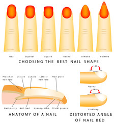 Nail shape. Anatomy of a nail