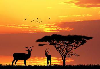gazzelle in African landscape