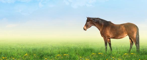 warmblood horse on summer pasture with dandelion, banner