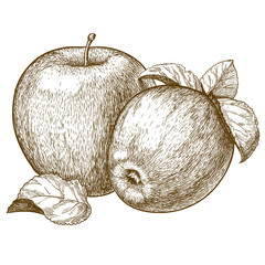 engraving two red apples and leaves