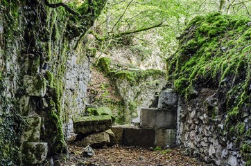 Ruins in the forest