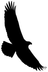 eagle flight silhouette
