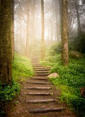 Fotobehang Bestsellers stairs going up hillside in forest toward sunset
