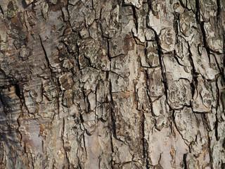 bark. background
