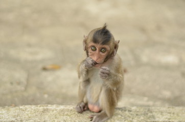Scimmia giovane in adorazione