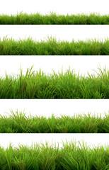 Fotobehang Gras grass isolated on white background