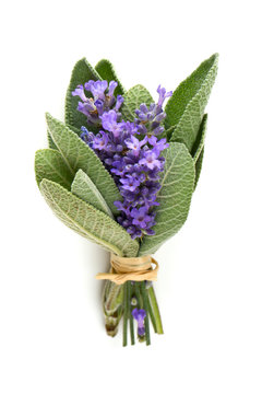 lavender and sage isolated on white