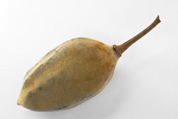 Poster Baobab Frutto del baobab (Adansonia digitata)