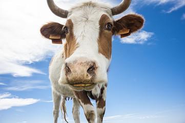 Mucca nel cielo