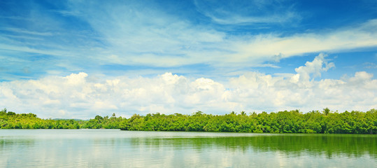 Wall Mural - Equatorial mangroves
