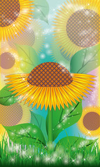 Sunflowers floral background. vector illustration
