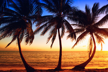 Wall Mural - Tropic sunrise through coconut palms