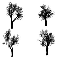 Vector silhouette of tree.