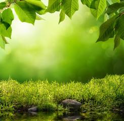 Wall Mural - Grüne Natur als Hintergrund