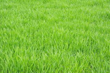 Gras Feld Hintergrund