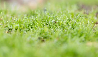 water drop on the green grass. macro