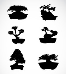 Set of trees in pots