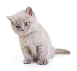 Cat isolated on white background.