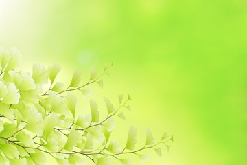 Beautiful field of leaf on nature background.