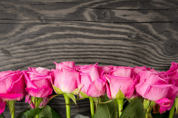 Rose bloom