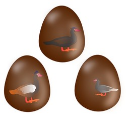 Brown easter eggs with picture Muscovy ducks