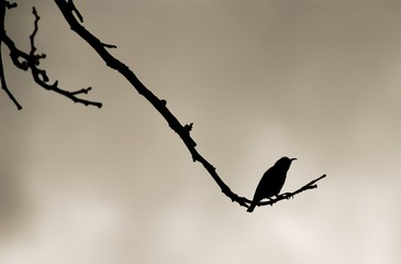 A lonely bird silhouette in sepia