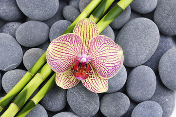 Macro of orchid and thin bamboo grove on zen pebbles
