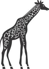 Giraffe- vector illustration