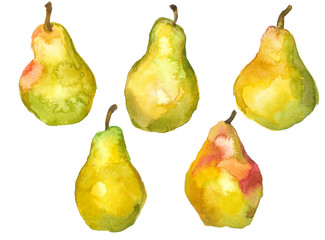 set of ripe pears,  watercolor sketch