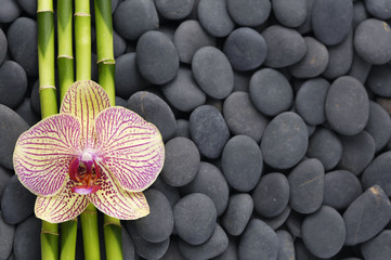 Gorgeous orchid and thin bamboo grove on pebbles