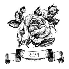 Sketch floral rose banner with ribbon. Hand drawn illustration