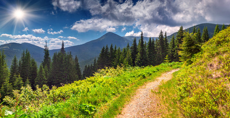 Fototapete - Colorful summer landscape in the mountains