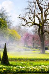 Fototapete - Art spring flowers in the  English park