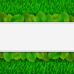green leaves on grass card, vector illustrations