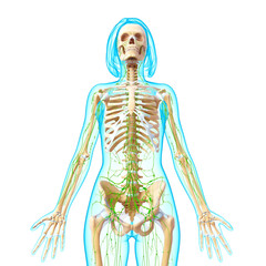 Anatomy of female lymphatic system in front view