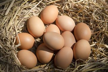 brown eggs at hay nest in chicken farm