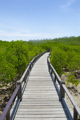 Wooden path in mangrove forest