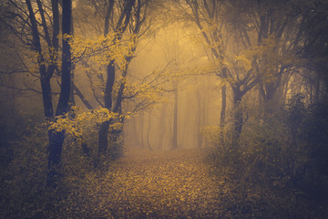 Photo sur Aluminium Gris traffic Mysterious foggy forest with a fairytale look