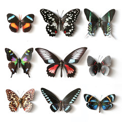 Stuffed insects Butterfly collection