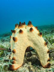 Starfish spawning