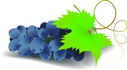 Виноград CMYK