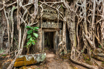 Fotomurales - Ancient stone door and tree roots, Ta Prohm temple, Angkor, Camb