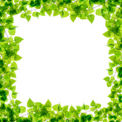 Green birch twigs frame