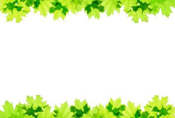 Frame of green maple leaves