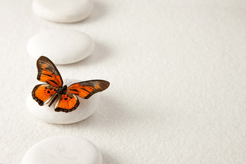 Background with rocks and butterfly