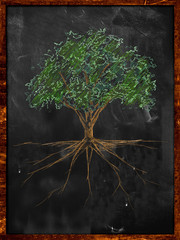 Tree Sketch color leaves and root on blackboard